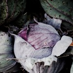 Red cabbage in mom's garden