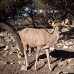 deer at the ranch