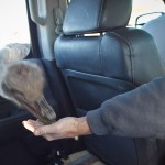 ostrich eating out of Doug's hand