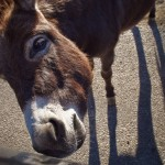 this burro kept fighting off other burros in order to get to my hand