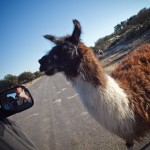 Doug gives a thumbs up after feeding the llama