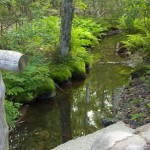 stream in the Wild Gardens of Acadia National Park